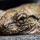 The Eye of the Frog by D-GaP
