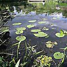 Spreewald water by voelzis