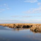 Calm waters in a quiet marsh by Ryan McGurl