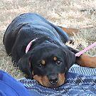 Baby Girl Rottweiler  by CreativeEm