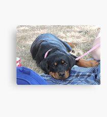 Baby Girl Rottweiler  Canvas Print