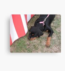 It's Tiring Being This Cute... Canvas Print