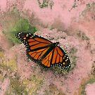 When Butterflies Dream by Jing3011
