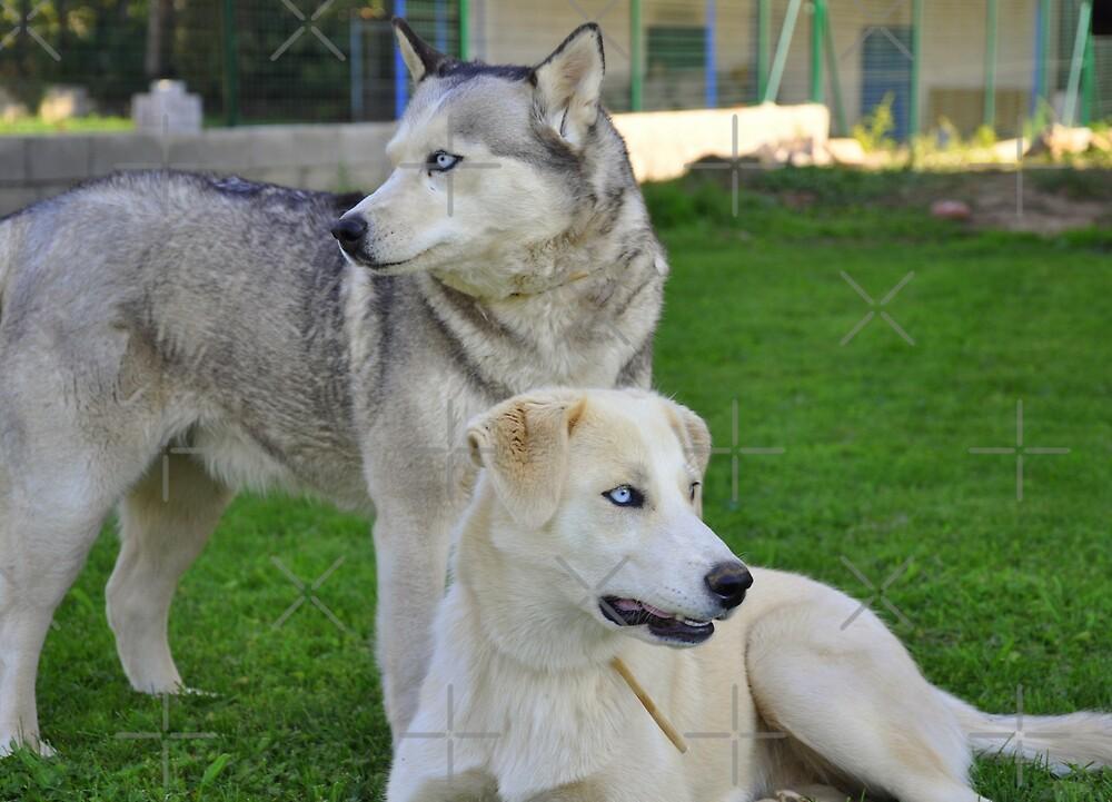 Husky & Daughter by Paul Revans