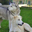 Husky & Daughter by EventHorizon