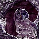 Owl by Cecilia G.F.
