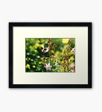 The life of a Bee Framed Print