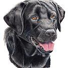 Labrador retriever - black by doggyshop
