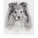 Shetland sheepdog by doggyshop
