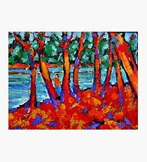 Red River Gums Photographic Print