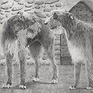 Irish wolfhound by doggyshop