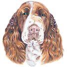English springer spaniel by doggyshop