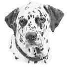 Dalmatian - dog by doggyshop