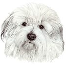 Coton de tulear - the cotton dog by doggyshop