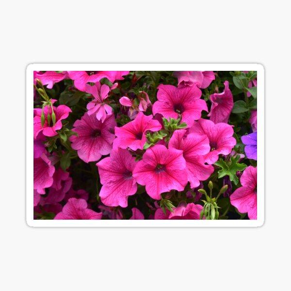 Real Beautiful Flowers outside Sticker