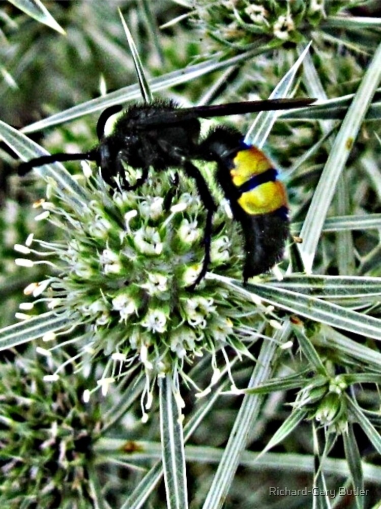 Wasp on a Thistle by Richard-Gary Butler