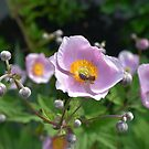 Real Beautiful Flowers outside bee by kamtec1