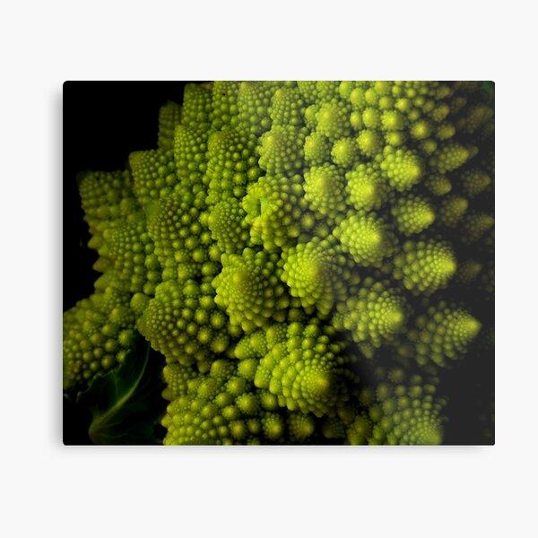 Romanesco Broccoli Metal Print