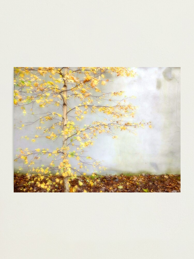 Alternate view of Yellow Leaves Photographic Print