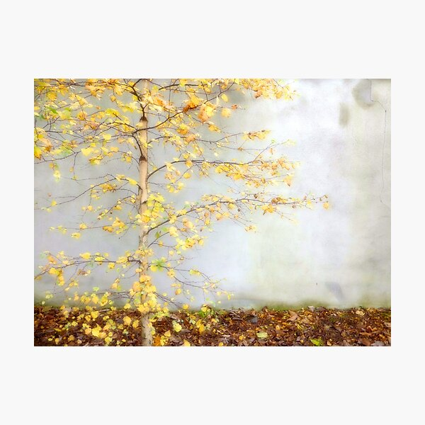 Yellow Leaves Photographic Print