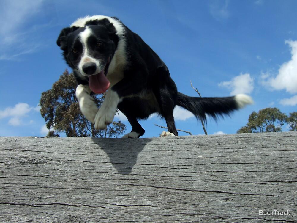 Zorro jumps log by BackTrack
