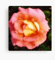 Light Orange and Pink Rose -Queen Mary's Rose Garden Canvas Print