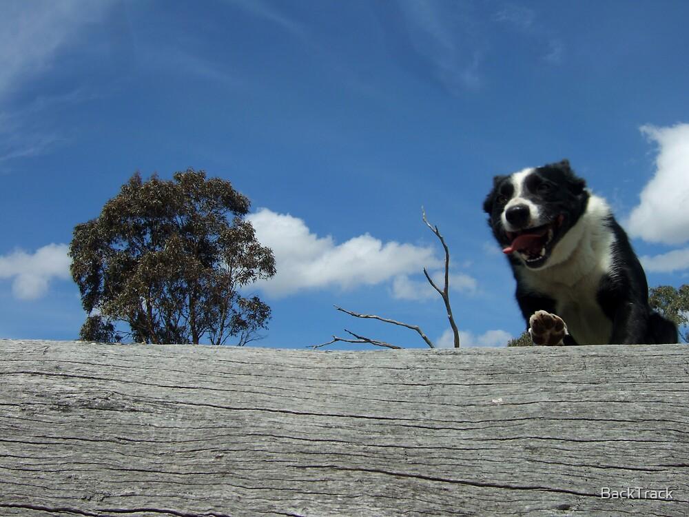 Zorro jumps log WS by BackTrack