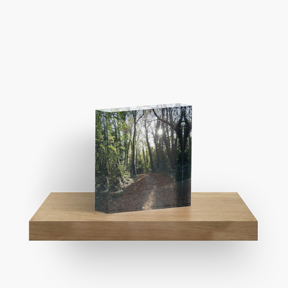 A Light in the Forest Acrylic Block