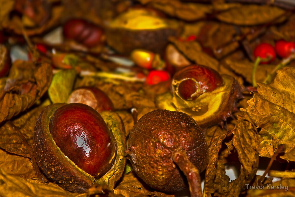 Nature's Fruits by Trevor Kersley