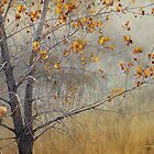 kestrel falcon pair on lone tree by R Christopher  Vest