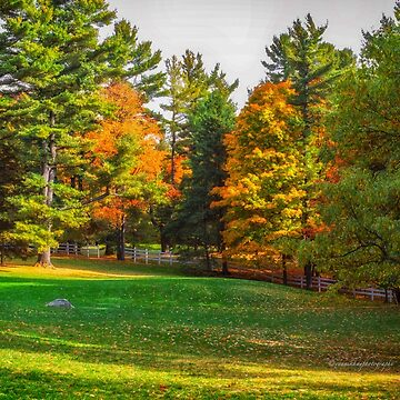 Autumn Colours 7 - MacKenzie-King Estate by Photograph2u