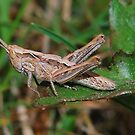 Baby hopper by relayer51
