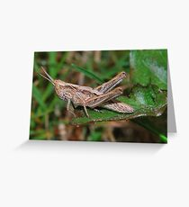 Baby hopper Greeting Card