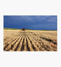 Harvested wheatfield Photographic Print