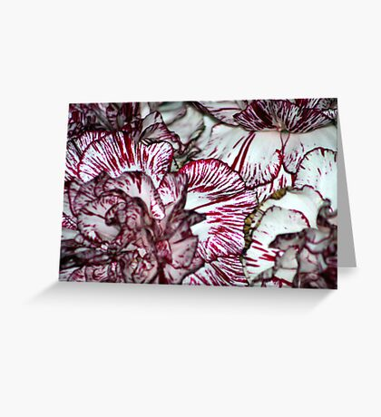 Carnation Textures Greeting Card