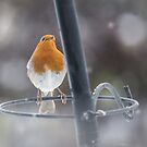 robin in the snow by MichelleRees
