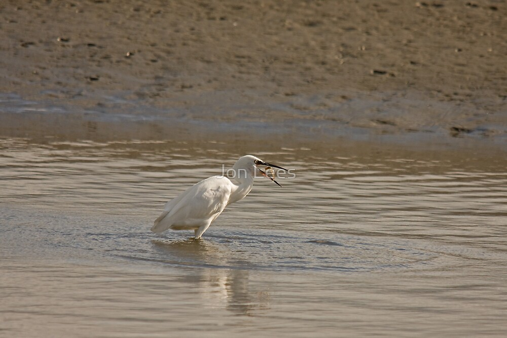 Little Egret catching a shimp by Jon Lees