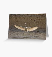Little Egret landing Greeting Card