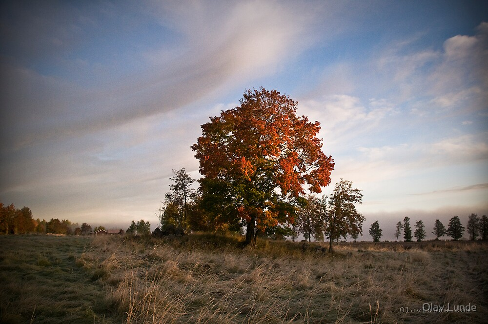 Red leaves by Olav Lunde