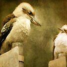 Kookaburra, Kingfisher by Margi