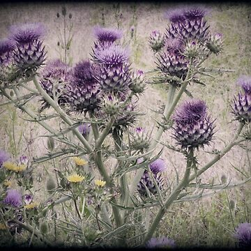 In a Thistle Field by Margi