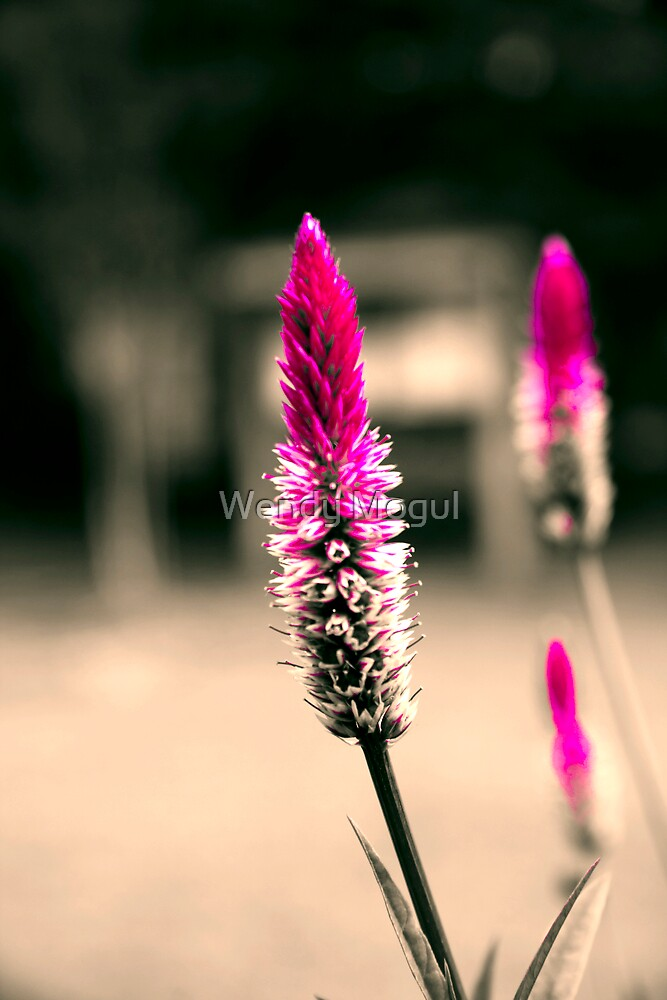 Purple Paintbrush by Wendy Mogul