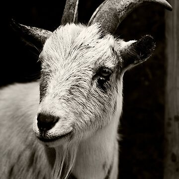 Mr. Goat by DianaG