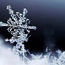 Frozen Intricacy by Bryce Bradford