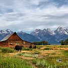 Moulton Cabin and Buffalos by Teresa Zieba