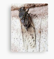 Cicada on brick wall Canvas Print