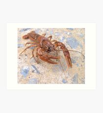 Crayfish Art Print