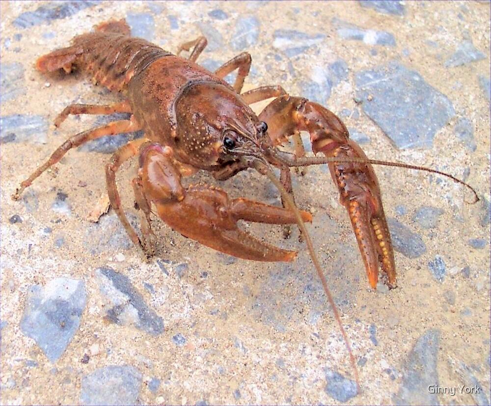 Crayfish by Ginny York