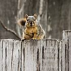 Hey, Got Any Nuts For Me?  by Heather Friedman
