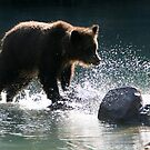 Grizzly Crossing by Lisa G. Putman